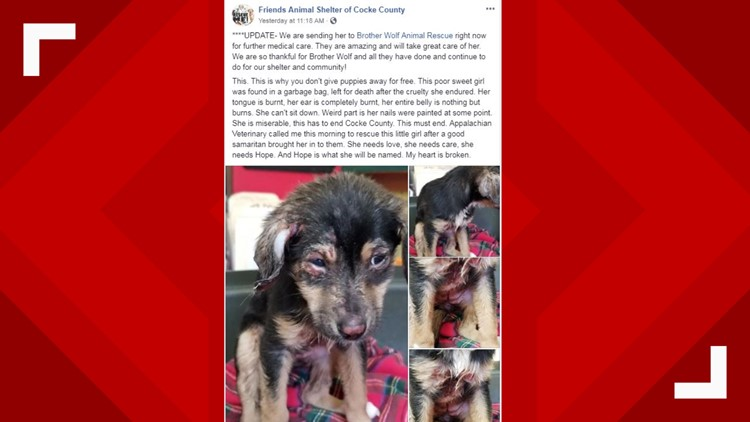 Facebook post about abused puppy Hope
