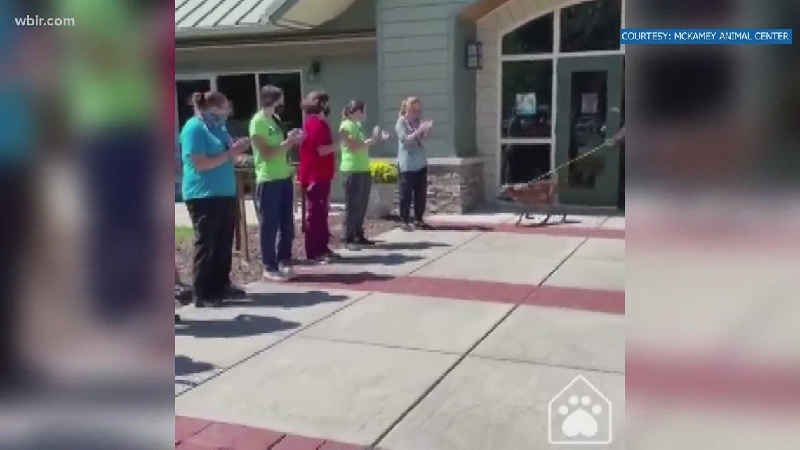 Dog who was longest resident at Chattanooga shelter is adopted!