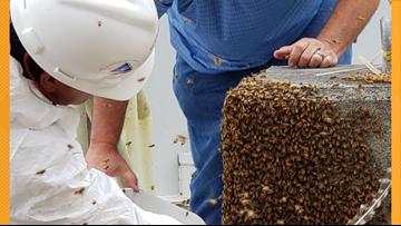 Watts Bar 'Bee-Team' saves 25,000+ swarming bees at nuclear plant