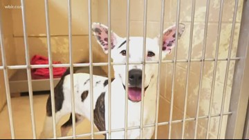 Delaware is now the first and only no-kill state for shelter animals in the US