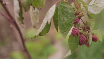 Farm to tap: How local ingredients get into beer