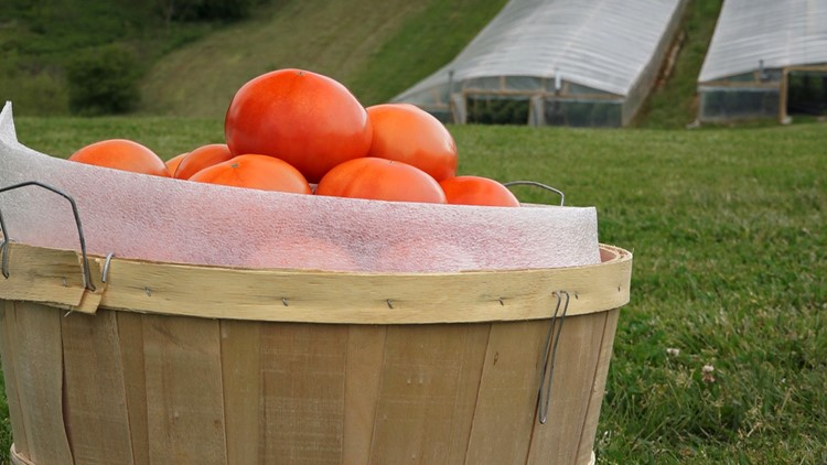 Ripe & Ready: The famous Grainger County Tomato Festival returns