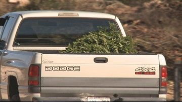 TVA: Don't chuck your tree into reservoirs! Recycle it instead