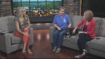 Pet of the Week: Flash