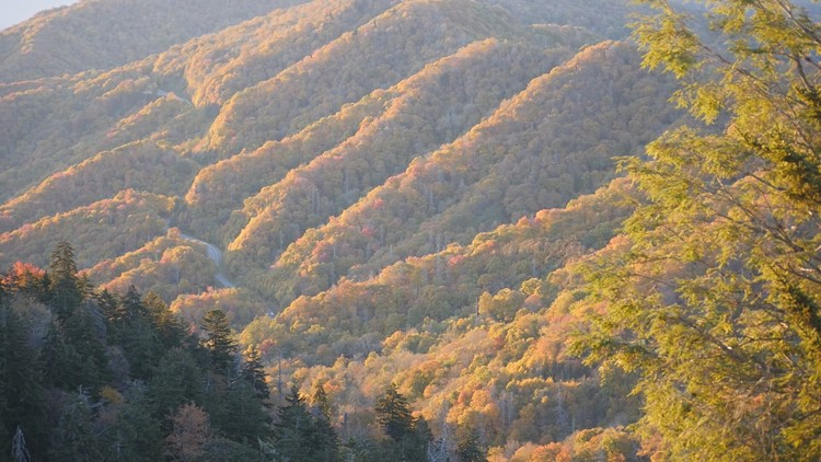 As we celebrate the Great Smoky Mountains National Park's 87th birthday, here are 5 things you may not know!