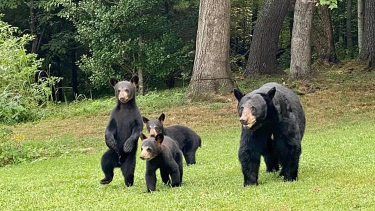 10 weird bear stories from the Great Smoky Mountains