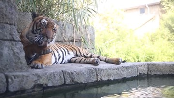 Brew at the Zoo craft beer tasting is Friday, September 20, at Zoo Knoxville