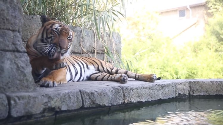 Zoo Knoxville was taking precautions to keep animals safe even before a tiger caught coronavirus