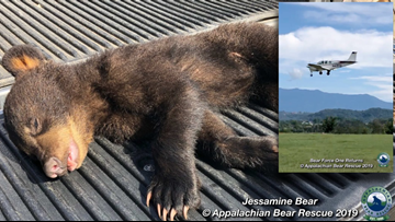 ABR calls in 'Bear Force One' to rescue orphaned four-month-old cub in SC
