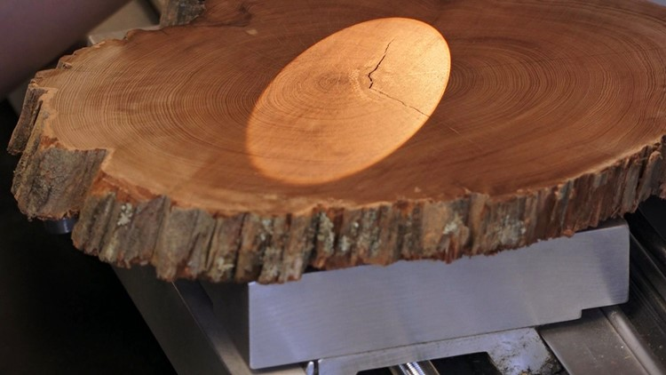 Microscope dendrochronology tree rings University of Tennessee TVA climate research