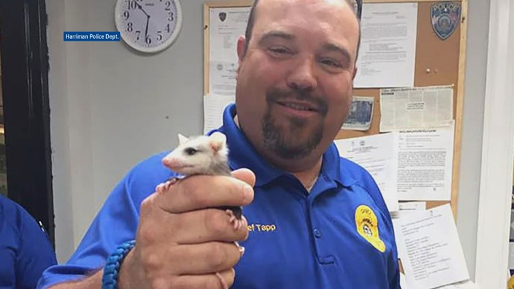 Harriman Police Department Possum Orphan