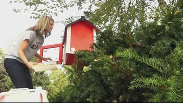 Rosie's Little Free Library pays it forward