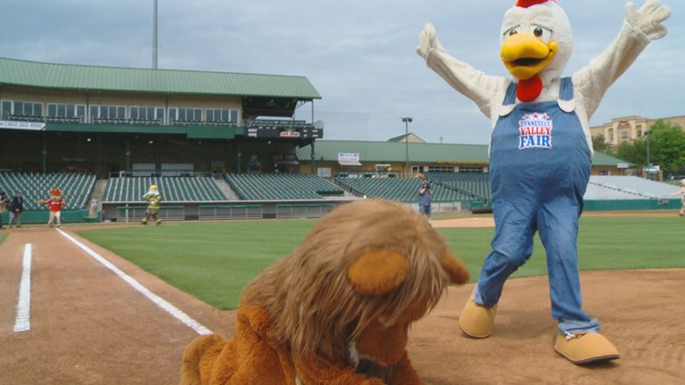 Mascot Baseball: The most dysfunctional-yet-entertaining game on TV in East Tennessee