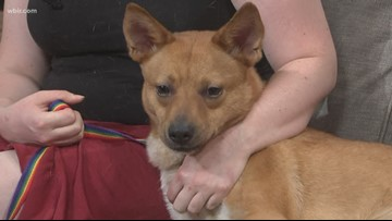Pet of the Week: Ruby