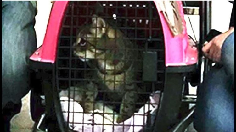 Cat captured after week hiding inside JFK Airport