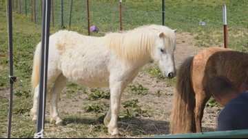 Mini horse and donkey rescue proves to be vital in Loudon