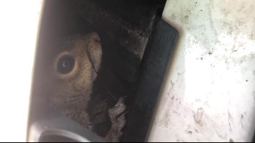 Squirrel rescued from Bristol Virginia State Police sergeant's police car