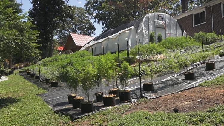 Industrial Hemp farm greenhouse Maryville