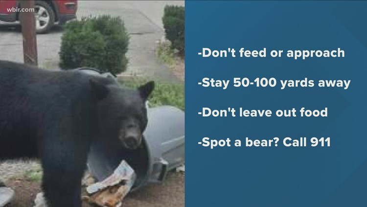 Couple injured in bear attack near Folk Art Center in Asheville