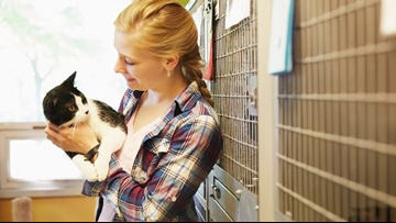 Clear The Shelters: 5 things to know before adopting your new fur-ever friend