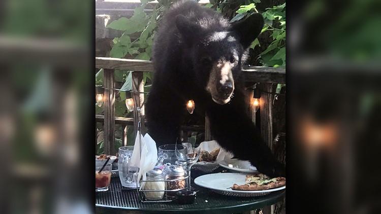Bear Howard Steakhouse Pizza Gatlinburg 1