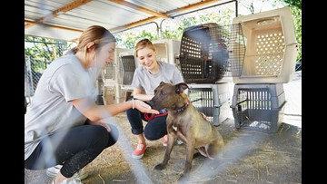 Clear The Shelters: The financial costs of owning your first pet