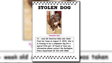 Companion dog of terminally ill 8-year-old in North Carolina stolen after break-in