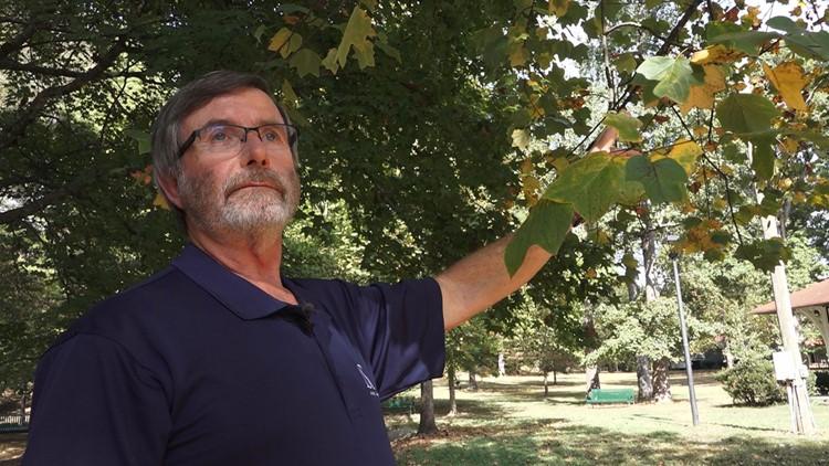 David Vandergriff Arborist Poplar Trees Fall Foliage 2019