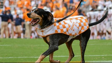 Smokey's State: Bluetick Coonhound officially Tennessee's state dog