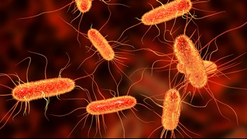 15 confirmed cases of E. coli in Knox Co. amid national outbreak