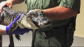 Middle TN police department warns about 'meth-gators' from flushing drugs down toilets