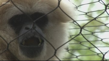 Spring season helps Zoo Knoxville recover