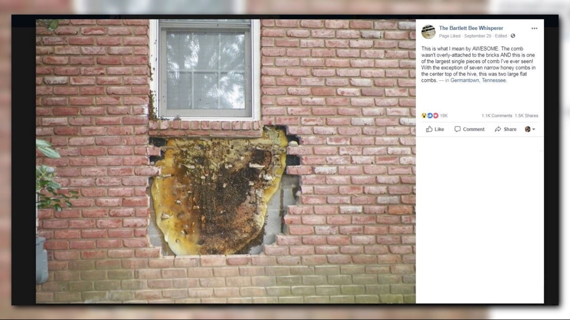 Ut Health Center >> Holy honeycomb! Beekeepers remove massive honeycomb from ...