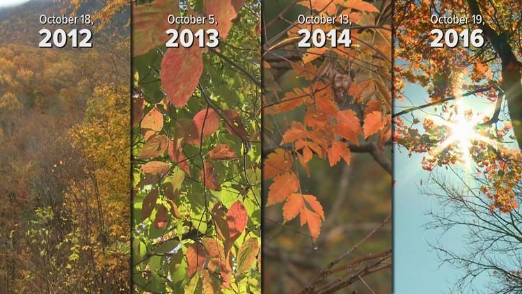 Foliage comparison mid-October 2012 2013 2014 2016