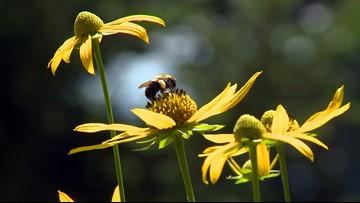 GSMNP ranks as top 5 best wildflower destination in U.S.