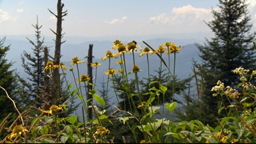 GSMNP offering one-day volunteer opportunities during summer months
