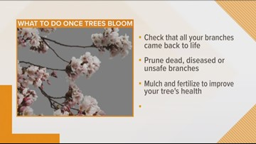 What to look out for as trees start to bloom
