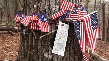 Patriotic response to Pearl Harbor tree grows in Smokies