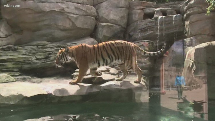Zoo Knoxville exhibit ranked nationally