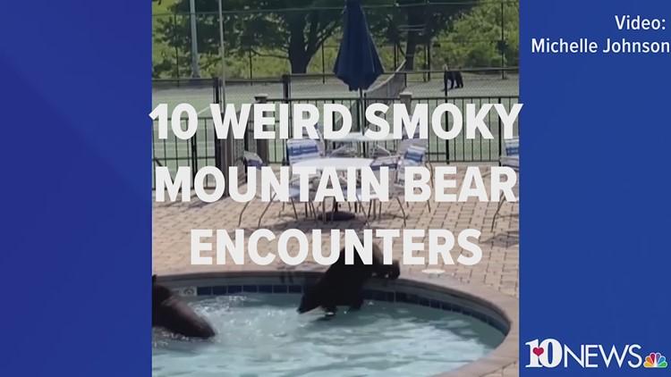 10 weird Smoky Mountain bear encounters