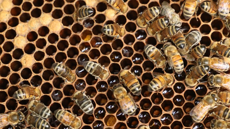 Honeybees are hard at work