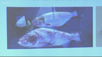 TWRA: Freeze small invasive carp you catch