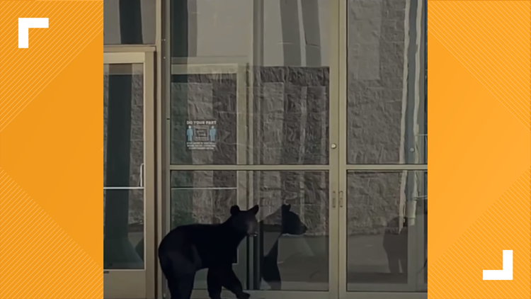 WATCH: Bear spotted trying to get into College Square Mall in Morristown