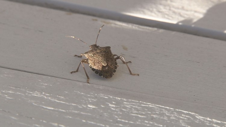 Hot temperatures bring out summer, fall bugs all at once