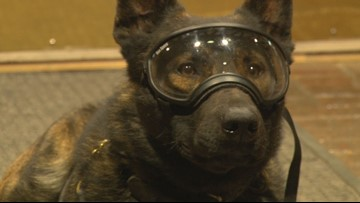 Morristown K-9's are stylish & safe thanks to donated goggles