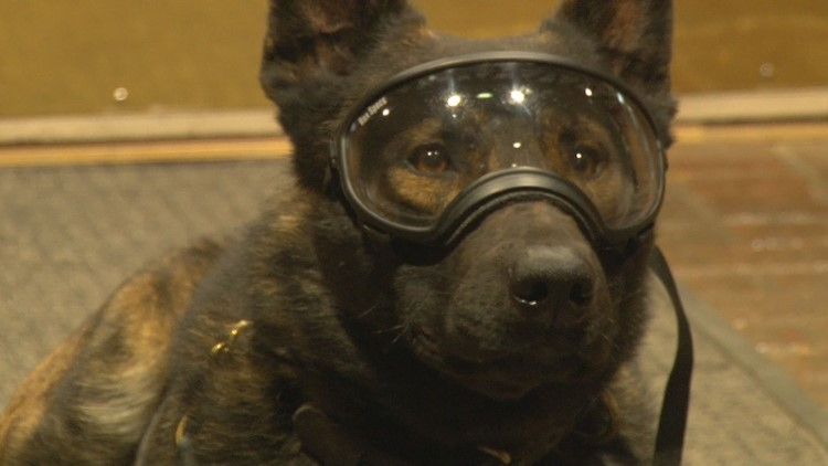 K-9 Rossi shows off his new protective goggles