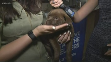Clear the Shelters in East Tennessee