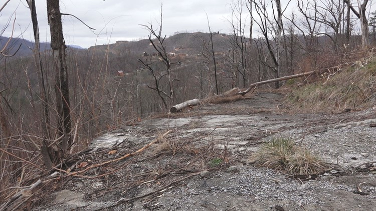 dormant winter kudzu vines wrapped around trees and property hit by 2016 wildfires