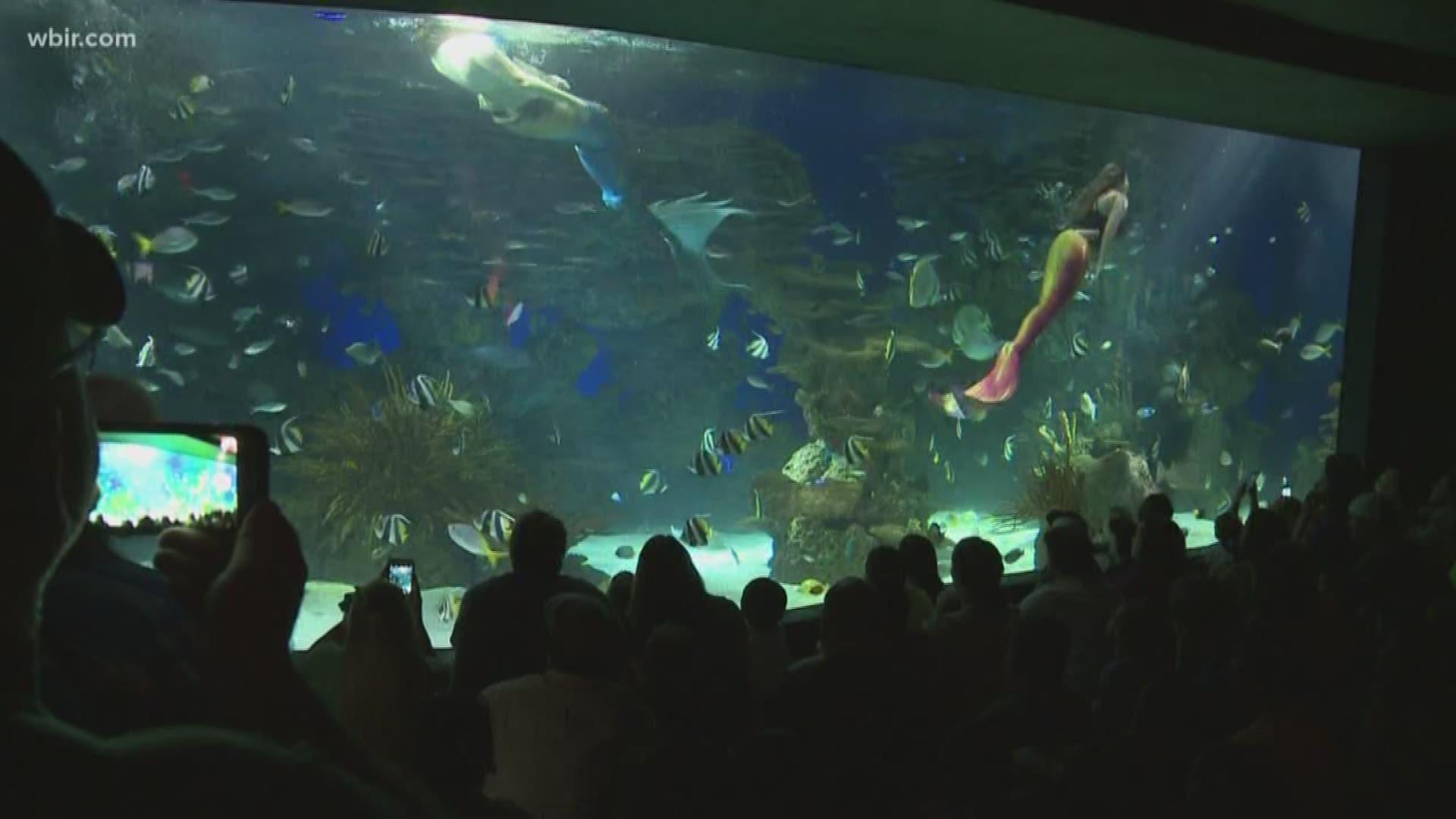 Mermaids make a splash at Ripley's Aquarium of the Smokies ...