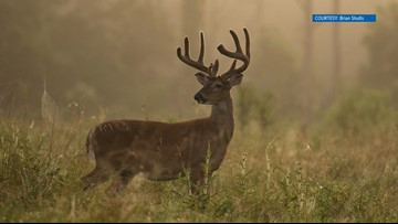 Tennessee's gun hunting season for deer opens soon